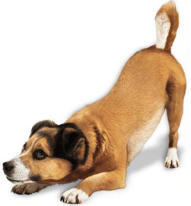 Download Dog Png Image Hq Png Image Dog Training Obedience Dog