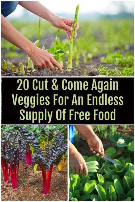 Veggie garden - 20 Cut & Come Again Veggies For An Endless Supply Of Free Food – Veggie garden Growing Veggies, Growing Plants, Growing Green Beans, Growing Vegetables In Containers, Growing Spinach, Growing Fruit Trees, Growing Herbs Indoors, Growing Carrots, Organic Gardening