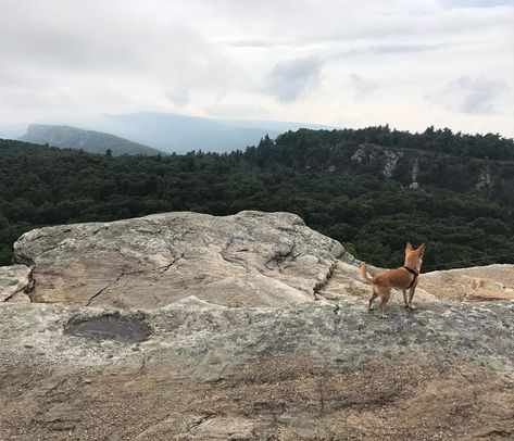 """@coleandjasmine on Instagram: """"That time Cole hiked lemon squeeze 🍋⛰ 🐾 🐾 🐾 🐾 🐾 #dogsofinstagram #chihuahua #outdoorpup #dogsthathike #beautiful #hiking #adventurepup"""""""
