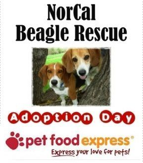 10 Glorious Beagle Friendly Loyal And Loving Ideas Best Ideas