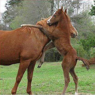 Maybe my favorite horse photo! Let me give you a hug Mom.