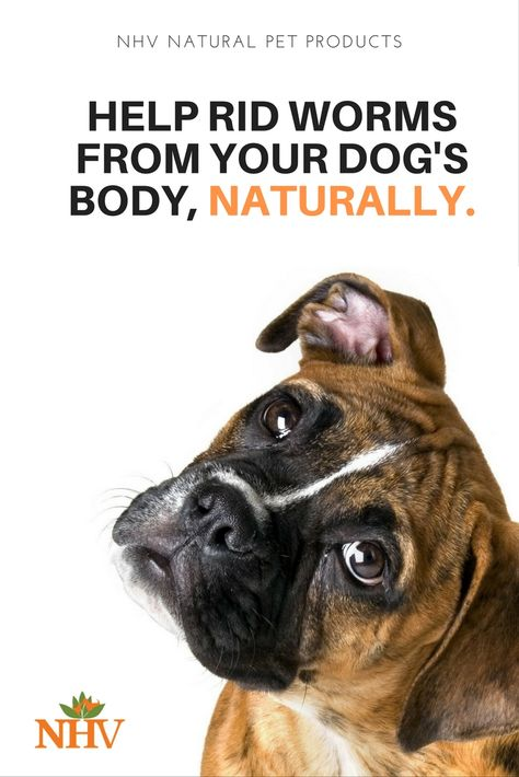 Inulin Pk For Dogs Boxer Dogs Boxer Dog Breed Dog Wallpaper