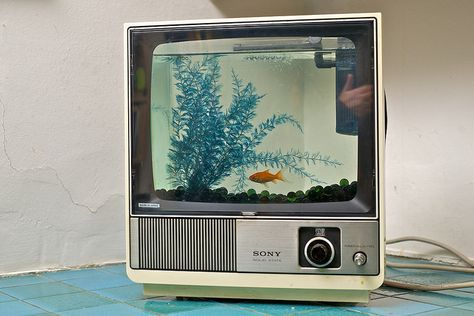 BRANDZERO Craft, design and production. Fish in a TV anyone? All our fish tanks have filters and aerators, and a light source. We also safely fit goldfish into loudspeakers and microwaves! Home Aquarium, Aquarium Design, Aquarium Fish Tank, Aquarium Shop, Fish Tank Themes, Aquarium Systems, Cool Fish Tanks, Aquarium Decorations, Old Tv