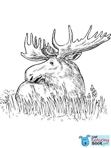 Moose Head Coloring Sheet Sunraysheetco With Regard To Sitting