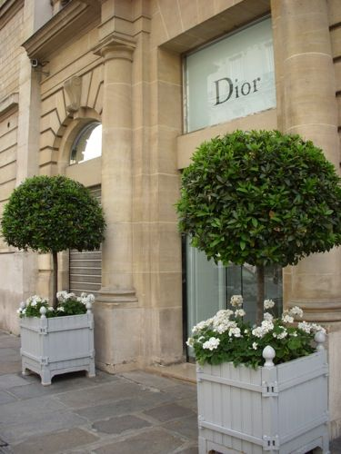 Dior. Stunning topiary bay laurel and white geraniums. Great combo and great location.