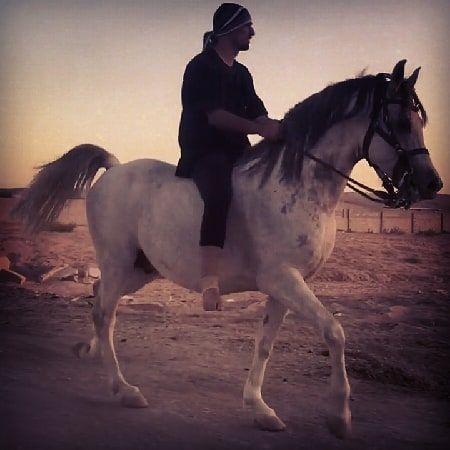 احمد الحقيل فارس الركوب العربي الطريقة العربية ركوب العرب طرق الركوب التزليق مواكبه Horses Horse Horselessons Horsemanship Arabian Arabianriding اح