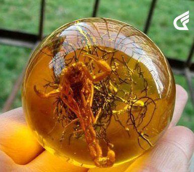 Rare old Baltic sub- amber Scorpion fossil ball 100%...