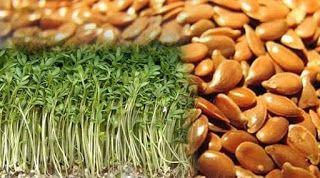العلاج بالنباتات فوائد حب الرشاد Vegetables Asparagus Beans