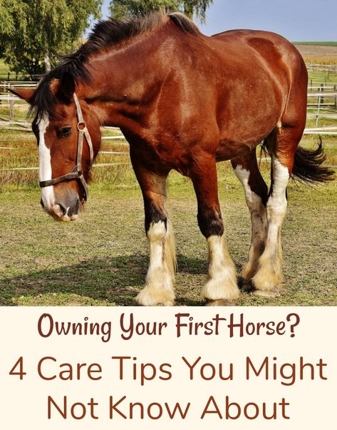 Owning a horse is an incredible opportunity. Here are four care tips to help you get a great start on owning your first horse. Buy A Horse, Horse Horse, Horse Stalls, Horse Riding Tips, Horseback Riding Tips, Horse Training, Training Tips, Cutting Horses, Horse Care Tips