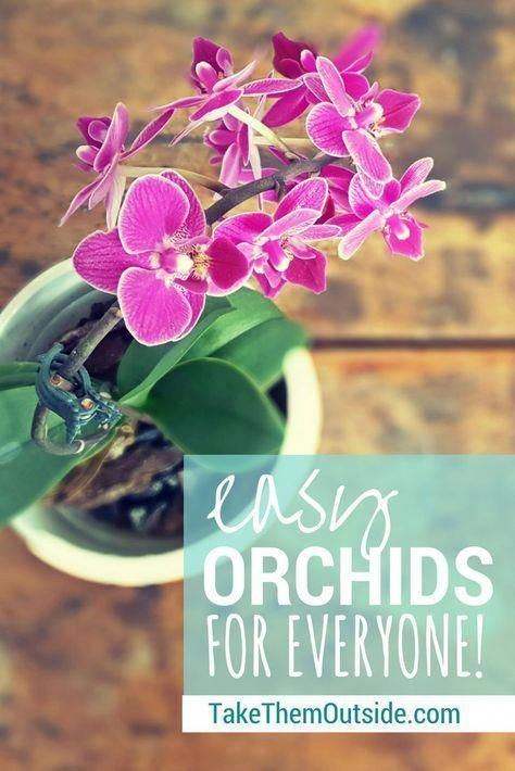 Orchids Asda Orchids Growing Orchids Orchid Care Orchids