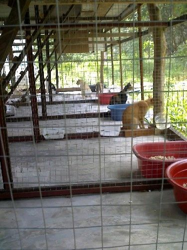 จะสร างกรงแมวนอกบ าน เอาแบบมาให ชมคร บ Pantip ส ตว เล ยง