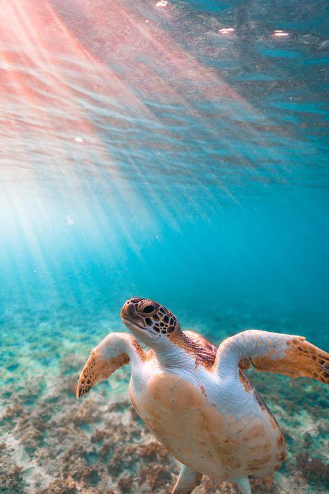 Dec 2019 - Dawn patrol with Mr. Ocean Wallpaper, Animal Wallpaper, Wallpaper Art, Wallpaper Backgrounds, Sea Turtle Wallpaper, Iphone Wallpaper, Aesthetic Pictures, Aesthetic Art, Aesthetic Painting