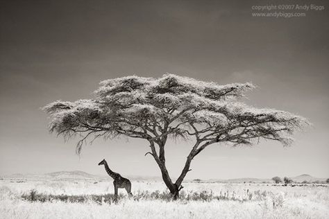 An Interview With Wildlife Photographer Andy Biggs Avec Images