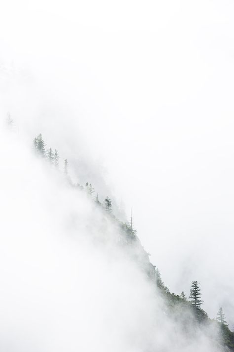 Trees in the fog//
