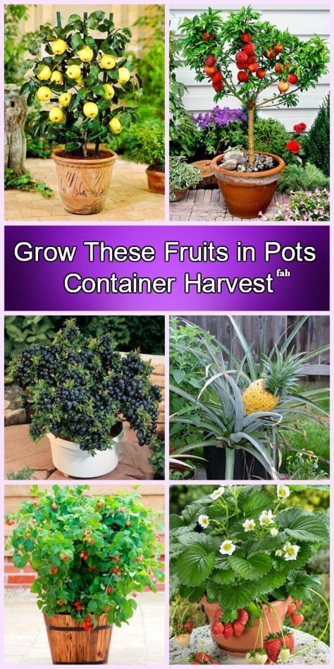 Container Gardening Grow Fruits in Pots DIY Tutorials Potted trees, Dwarf fruit trees, Container gar Fruit Garden, Garden Trees, Vegetable Garden, Container Gardening Vegetables, Container Plants, Container Flowers, Growing Plants, Growing Vegetables, Growing Fruit Trees