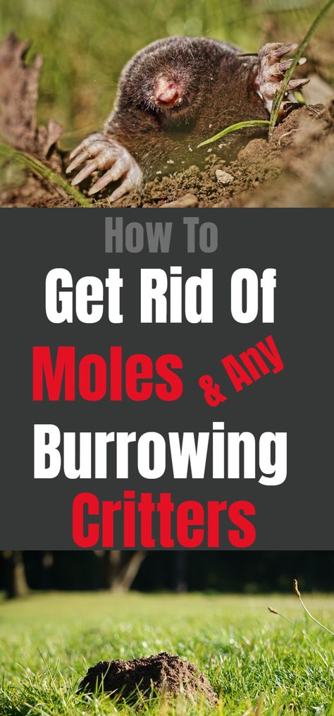 Use Dawn Dish Soap To Rid Your Yard Of Moles & Any Burrowing Creatures