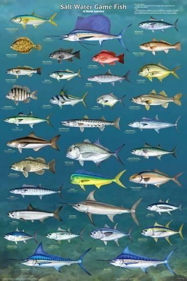 View This On Saltwater Fishing Salt Water Fishing Salt And Water Salt Water Fish