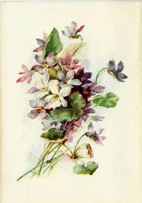 Springtime violets of the Victorian Era