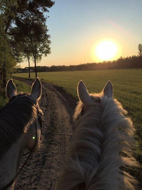 Cute Horses, Pretty Horses, Horse Love, Beautiful Horses, Horse Girl Photography, Animal Photography, Nature Aesthetic, Travel Aesthetic, Cavalo Wallpaper