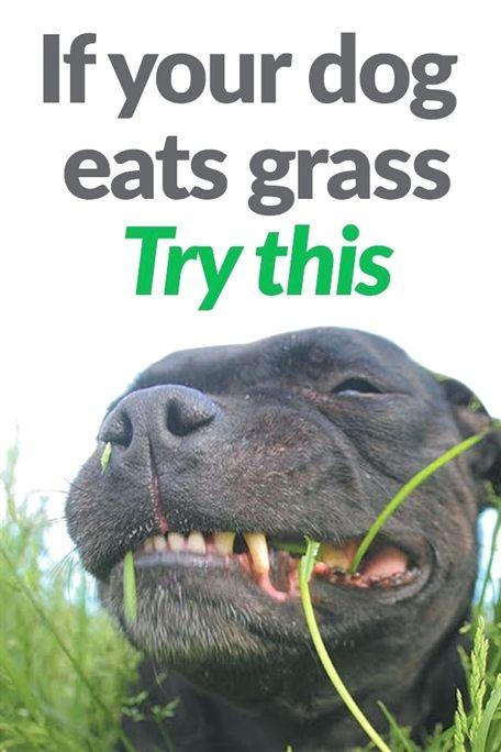 Beyond The Dog Training Kansas City Dog Training Sarasota Dog