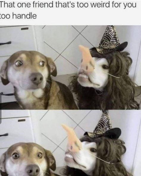 Morning Wake Up Call Fresh Animal Memes September 27th 2020 Animal Memes Funny Animal Memes Cute Animal Memes