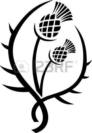 Thistle, floral emblem of Scotland