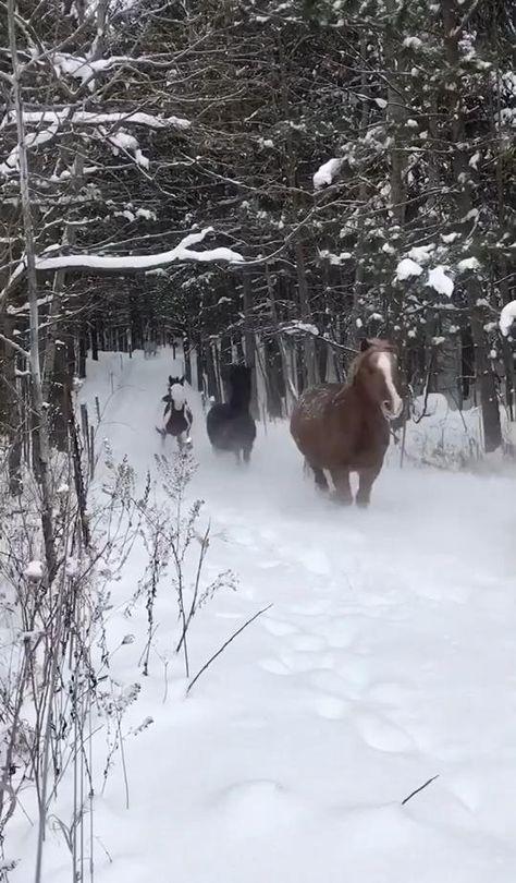 Horses running in the snow. #winter #snow #travel #traveltips