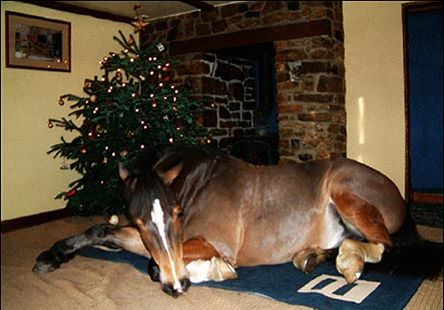 I knew Santa would bring me a pony! lol lol