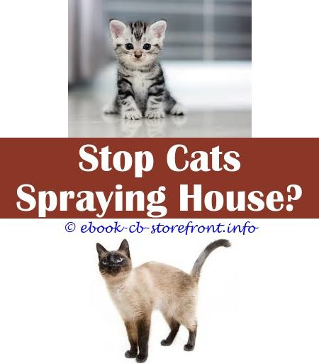 Awesome Tips Petco Sentry Calming Spray For Cats What Is The Best