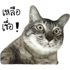 น องหมาช อปลาด บ น องแมวช อล ออง มาต น และสวย แมว ร ปแมวขำๆ ภาพหมา ขำข น