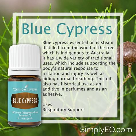Blue Cypress, sometimes referred to as Blue Gold is a beautiful, naturally cobalt blue essential oil that comes from a tree. It supports a healthy respiratory system. This oil supports muscles and is great to use post-workout. It can also moisturize skin. When applying topically, you can use it alone or blend it with Sacred Frankincense, Lavender and Royal Hawaiian Sandalwood essential oils to hydrate your skin after time outside.