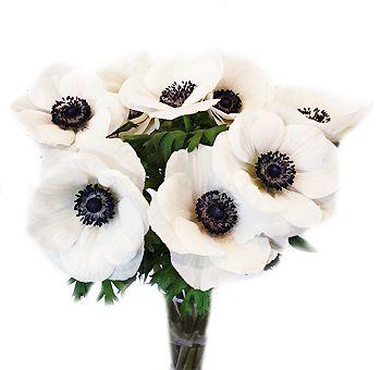 Buy White Anemone Flower Online In 2020 White Anemone Flower Gladiolus Wedding Flowers Anemone Flower