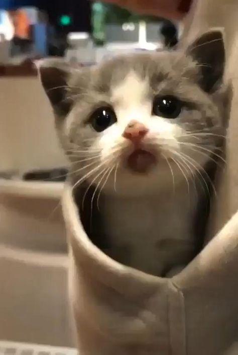 #animal #animals #pet #cute #aww #awww #adorable #cat #cats #kitty #meow #kitten #kittens #cutecats