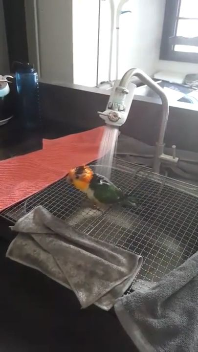 Birds Love To Bath....