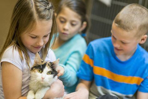 Volunteer at an animal shelter - Awesome Things to do with Your Kids this Summer - Photos