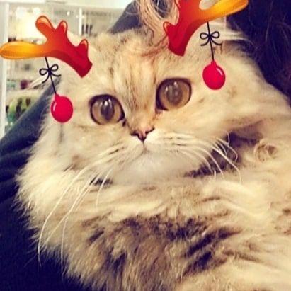 Poothi Cat Cat Cutecats Puchitu Mycat Cute قطط قطط بسة هره هرر قطتي قطة صغيرة Bts Army Jungkook Taehyung Bla Cats Animals