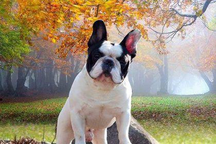 Most Popular Dog Breeds In The U S Https Cstu Io 59409d Most Popular Dog Breeds Top 10 Dog Breeds Popular Dog Breeds