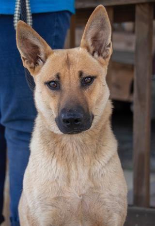 Www Petharbor Com Animal Search All Animal Shelter Black