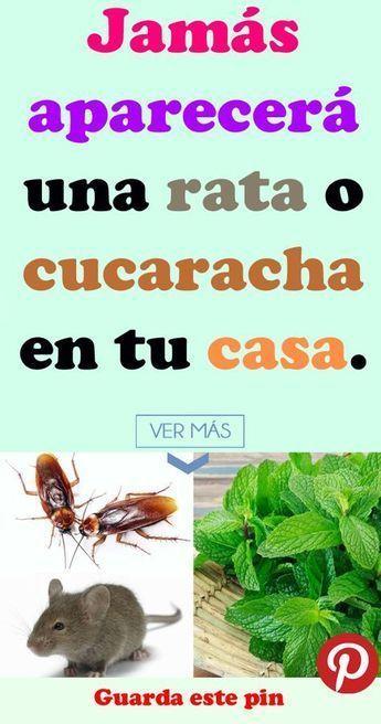 Como Acabar Con Las Ratas En El Jardin Jamas Aparecera Una Rata O Cucaracha En Tu Casa Aparecera Rata