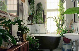 bathroom garden