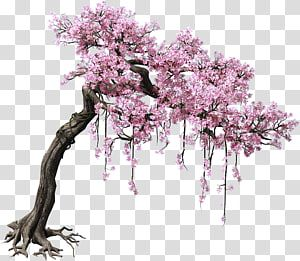 Pink Cherry Blossom Tree Peach Tree Color Game Scene Trees Transparent Background Png Cl Cherry Blossom Tree Tattoo Cherry Blossom Art Cherry Blossom Drawing