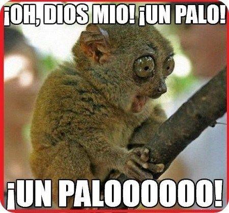 Imagenes Chistosas Para Descargar Humor Divertido Sobre Animales Memes De Animales Divertidos Mascotas Memes