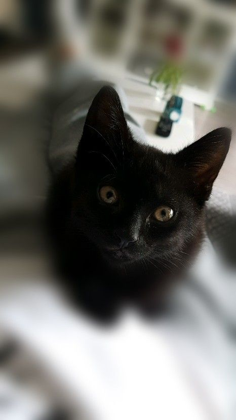 Pin By Sydney On Black Cats With Images Cat Feline Cute Black Cats Black Cat