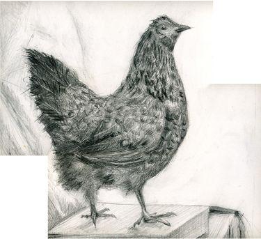 """Saatchi Online Artist Vladimir Fenichev; Drawing, """" Chicken glance"""" #art"""