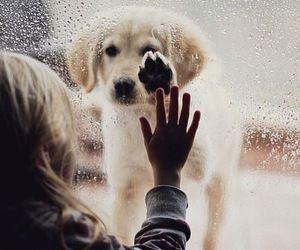 Imagine dog, animal, and puppy