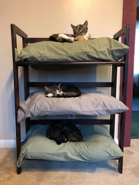 3 old pillows plus a bookshelf equals instant cat bunk beds. 3 old pillows plus a bookshelf equals instant cat bunk beds. Cat Bunk Beds, Cool Cat Beds, Pet Beds, Cool Cats, Diy Cat Bed, Old Pillows, Cat Room, Pet Furniture, Luxury Furniture