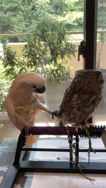Lovely Fellow Birds.....