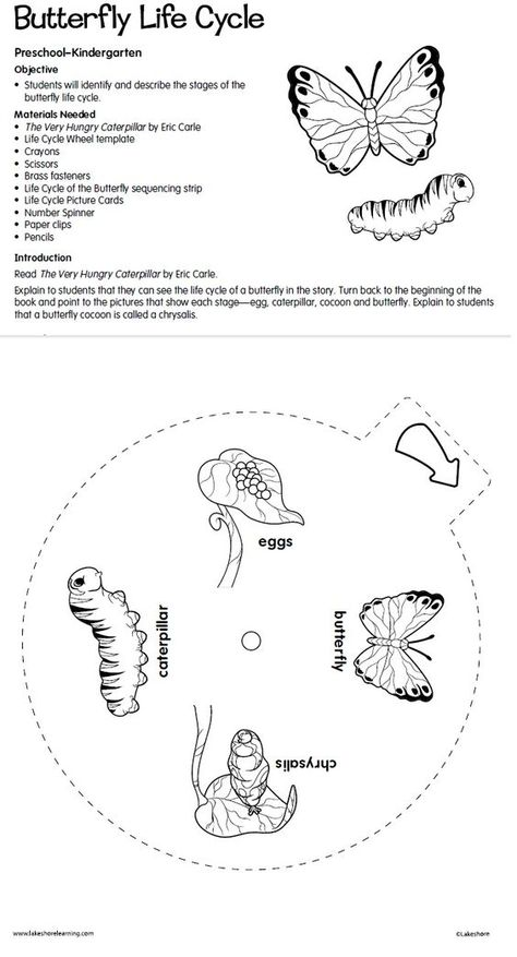 Butterfly Life Cycle Lesson Plan from Lakeshore Learning