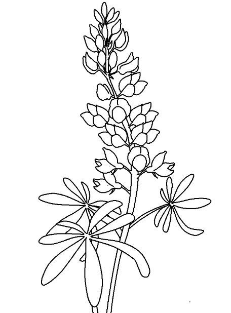 Coloring Page Base Flower Coloring Pages Flower Drawing Blue