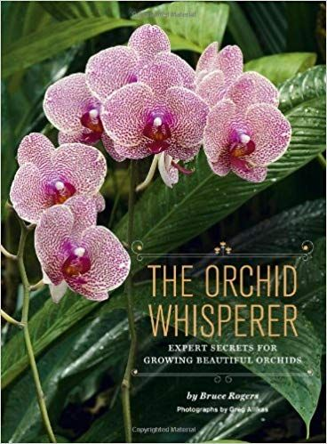 How To Revive An Orchid From Dying This Really Works Beyond Imagination Beautiful Orchids Orchids 101 Growing Orchids
